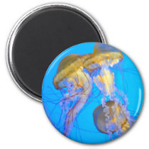 Jellyfish Magnet from the MJ Jellyfish Collection