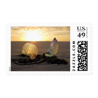 Jellyfish Man O War Beach Ocean Life Stamp