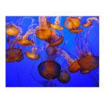 Jellyfish Mess Postcard