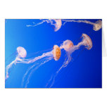 Jellyfish Note Card