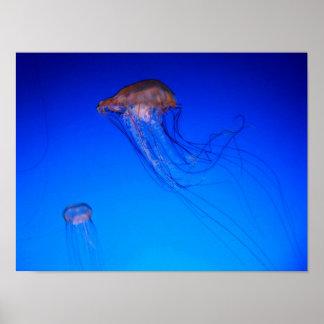 Jellyfish Photo Poster