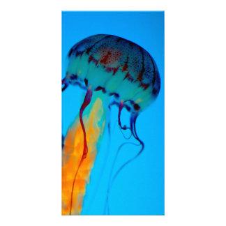 Jellyfish Photo Cards