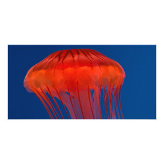 Jellyfish Photo Greeting Card