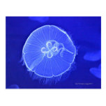 Jellyfish Post Cards