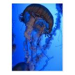 Jellyfish Postcard