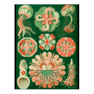 Jellyfish Postcards