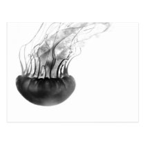 Jellyfish Postcard (Black and White)