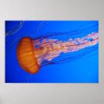 Jellyfish Poster 1
