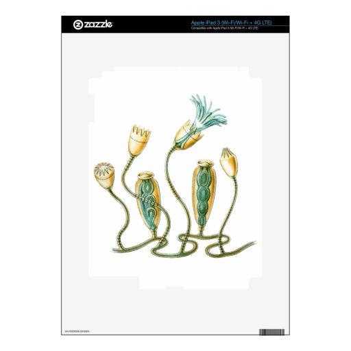 Jellyfish Skin For iPad 3