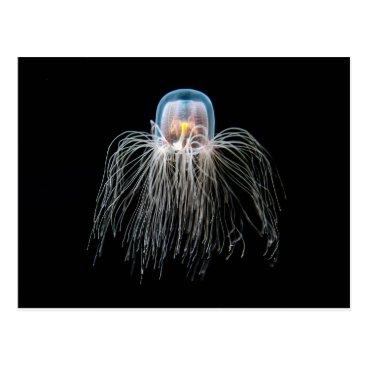 Armadillo_Postcards Jellyfish (turritopsis nutricula) postcard