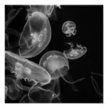 Jellyfish Underwater Poster