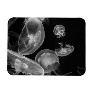 Jellyfish Underwater Rectangular Photo Magnet