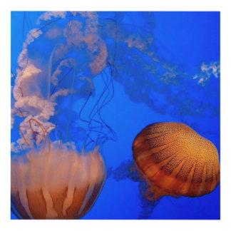 Jellyfish wall  art