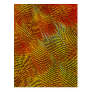Jenday Conure Feather Abstract Postcard