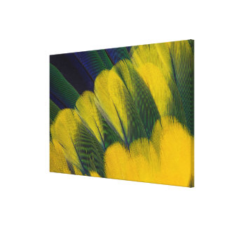 Jenday Conure Feathers Close-Up Canvas Print