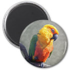 Jenday Conure Magnet