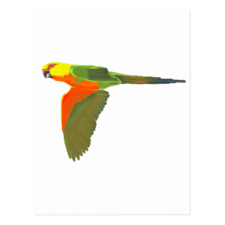 Jenday Conure Postcard