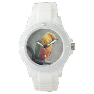 Jenday Conure Watch