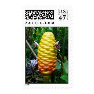 Jengibre de la colmena sellos postales