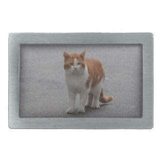 Jengibre de Thomas y gato blanco
