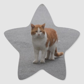 Jengibre de Thomas y gato blanco Pegatina En Forma De Estrella