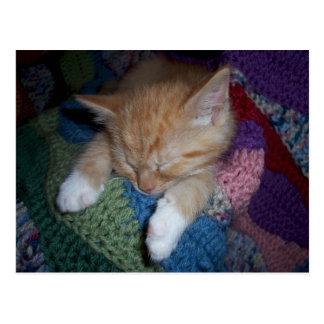 Jengibre el dormir y gatito blanco tarjetas postales