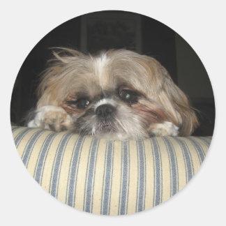 Jengibre el perro pegatinas redondas