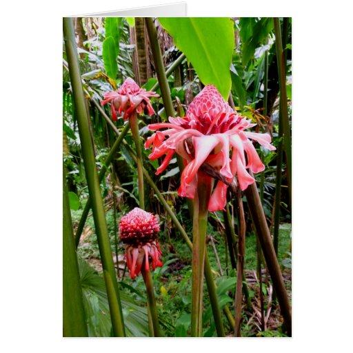 Jengibre hawaiano de la antorcha tarjeta de felicitación