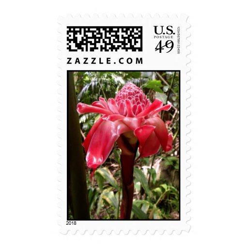 Jengibre hawaiano salvaje de la antorcha sello