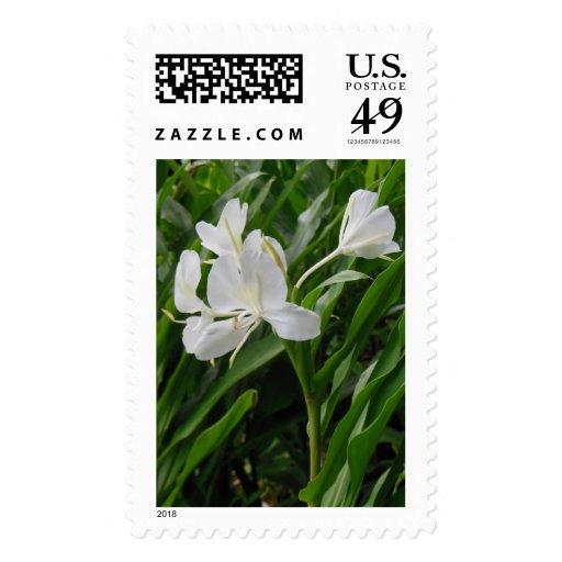 Jengibre hawaiano sello postal