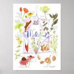 Jengibre medicinal del Echinacea del ajo de la hie Poster