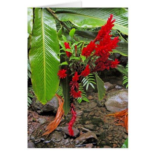Jengibre rojo hawaiano salvaje tarjeta de felicitación