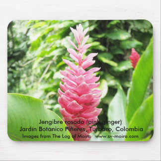 Jengibre rosado (pink ginger) mouse pad