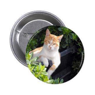 Jengibre y gato blanco pins
