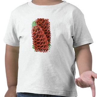 Jengibre, Zingiber de la colmena spectabile), Camiseta