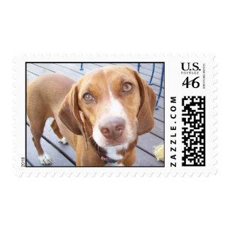 Jenna 2 postage stamps