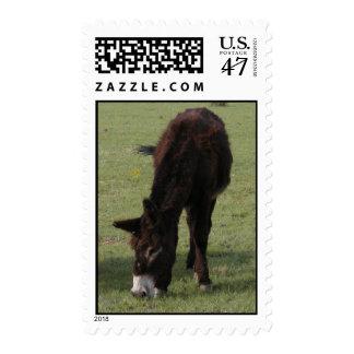 Jenny Lynn Memorial Postage Stamp