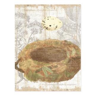 Jerarquía con el huevo manchado postales