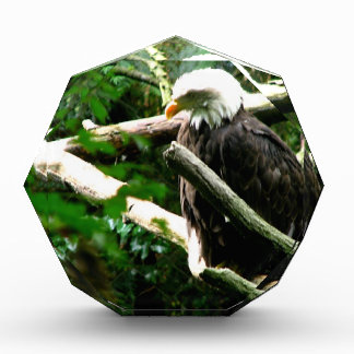 Jerarquía de Eagles