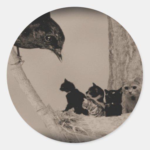 Jerarquía de gatos pegatina redonda