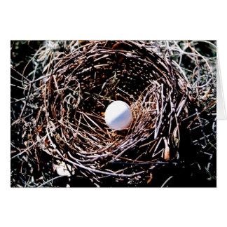 Jerarquía del pájaro con el huevo tarjeta de felicitación