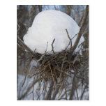 Jerarquía del pájaro del invierno tarjeta postal