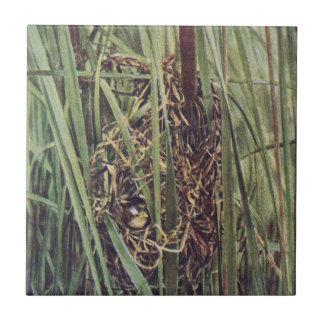 Jerarquía del Wren de pantano en Cattails Azulejos Cerámicos