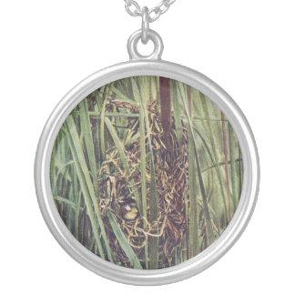 Jerarquía del Wren de pantano en Cattails Pendientes