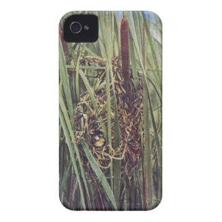 Jerarquía del Wren de pantano en Cattails iPhone 4 Case-Mate Cobertura