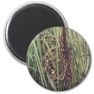 Jerarquía del Wren de pantano en Cattails Imanes