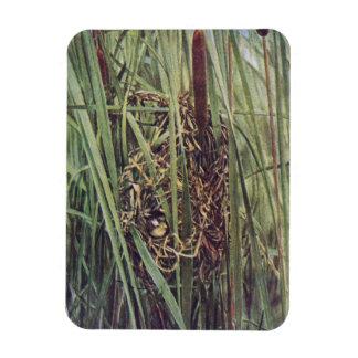 Jerarquía del Wren de pantano en Cattails Iman De Vinilo