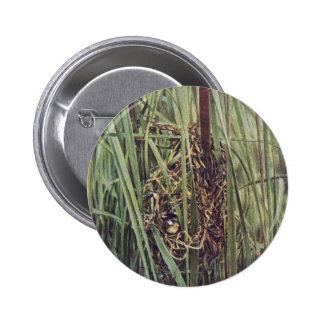 Jerarquía del Wren de pantano en Cattails Pins