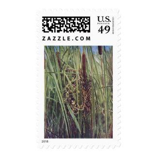 Jerarquía del Wren de pantano en Cattails Sello