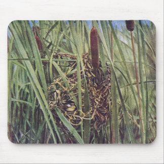 Jerarquía del Wren de pantano en Cattails Tapete De Ratones